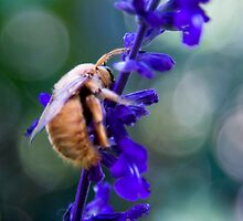 Bee's Bliss by Ron LaFond