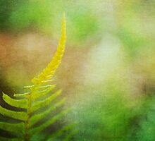 A Little Fern by BPhotographer