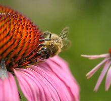 Healthy bee by Lifeware
