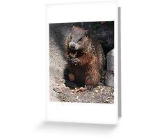 Baby Groundhog Greeting Card