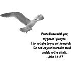 Seagull with John 14:27 Verse by Corri Gryting Gutzman