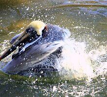 Pelican Fun by AuntDot