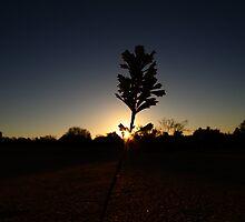 Silhouettic, Pinnacles, WA by JVGMcGhie