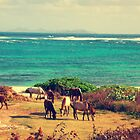 Seaside grazing - Saint Martin   by islefox