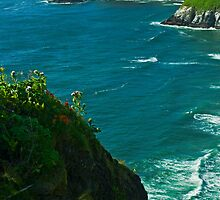 Heceta Head Viewpoint by Nick Boren