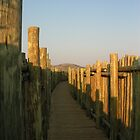 African Pathway - Pilanesberg Game Reserve,South Africa by ColletteHoppe