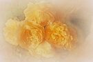 Dreamy Roses by Elaine Teague