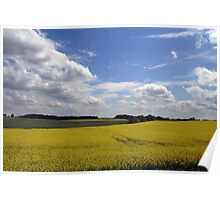 Rapeseed field in sunshine Poster