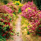 Footpath with azaleas by Gaspar Avila
