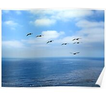 Pelicans and the Sea Poster