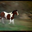 TTV Horse Photo. by mikepemberton