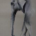 Elephant study by Lynn Hughes