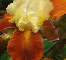 Gold and Brown Iris by Betty Mackey