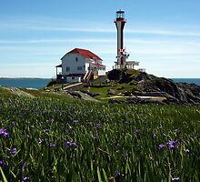 Cape Forchu Lighthouse and Irises  by Debbie  Roberts