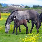 Amorette & Foal by James Zickmantel
