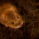 There's a Vole in my Bucket! by John Dewar