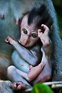 I'm a baby Balinese Macaque by Chris Westinghouse