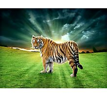 Let's Walk Towards The Sun, Said The Tiger Photographic Print