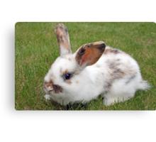sweet baby rabbit Canvas Print