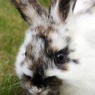 cutie bunny in the garden  dawarf lop  by liza scott