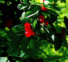 So Berry Nice by Marcia Rubin
