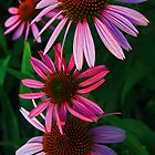 Summer Coneflowers by JLBphoto