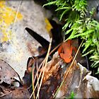 Eastern Newt by anchorsofhope