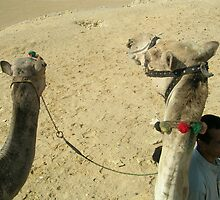 Camel Ride at Egypt by kellymorrison