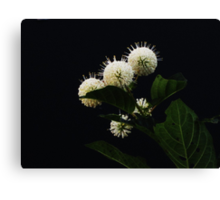 In Bloom In June Canvas Print