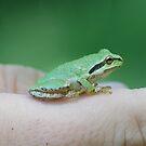 frog by Barbara Anderson