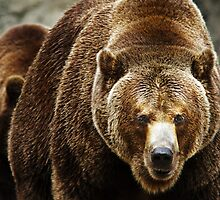 Brown Bear by Mikhail Lenitsyn