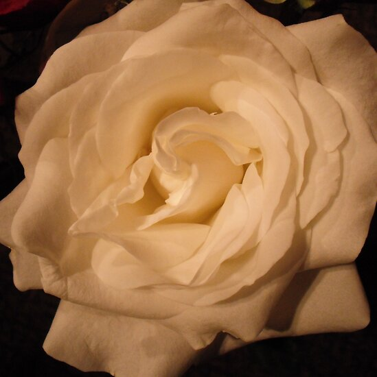 Rose White by Michael Skeard