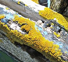 lichen on shipwreck by lalik