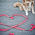 Love Has Four Legs by -gila-