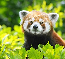 WHERE IS MY BAMBOO? by mc27