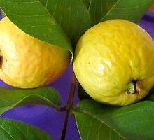 Guavas by D. D.AMO