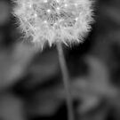 Make a wish by Evette Lisle