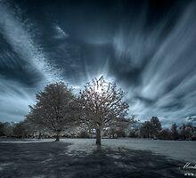 Farnham Park Rays by Martin Finlayson