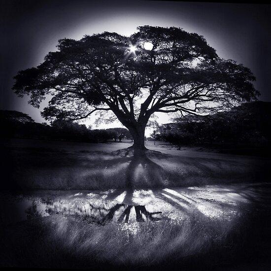 Tree of Life by Anita Antoniutti
