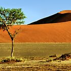 Namib Desert Dunes, Tree & Dry Tsauchab River Valley, Namibia  by Carole-Anne