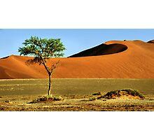 Namib Desert Dunes, Tree & Dry Tsauchab River Valley, Namibia  Photographic Print
