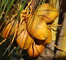 Coconuts by Leon Heyns