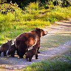 Grizzly Bear #399 and Her Three Cubs by cavaroc
