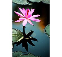 Pink - waterlilly Photographic Print