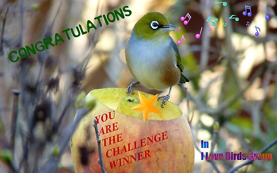 Challenge Winner Banner - I love birds group by AndreaEL