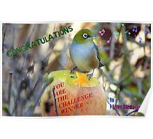 Challenge Winner Banner - I love birds group Poster