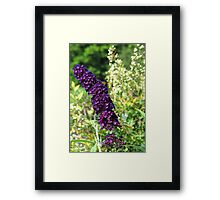 Purple and Orange Flowers, North Carolina Framed Print