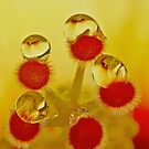 Drops on a Hibiscus Stamen........ by AroonKalandy