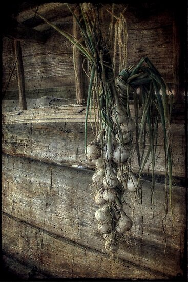 The Harvest by Christine Annas