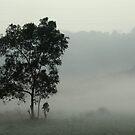 mysterious mist by Keyur Mehta